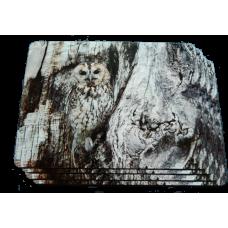 Owl Placemat Set